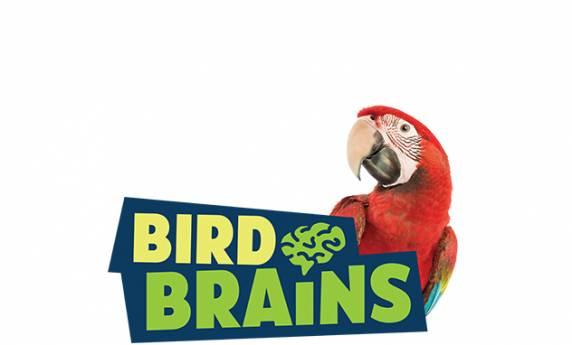 National Aviary: Bird Brains
