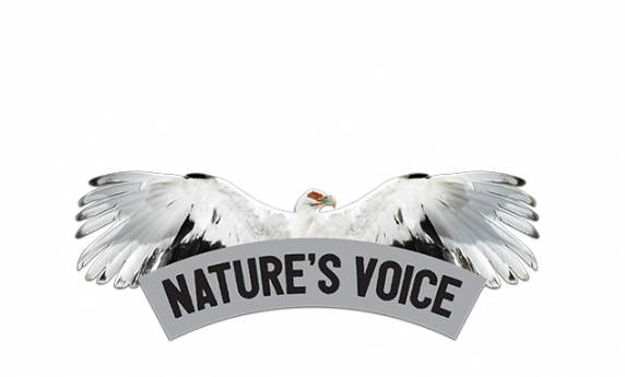 National Aviary: Nature's Voice