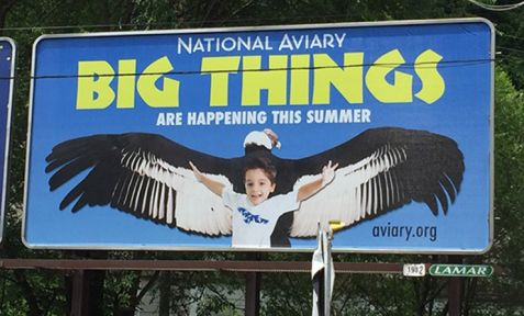 National Aviary Billboard