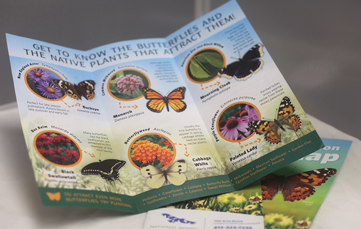 National Aviary Butterfly Garden Publication Designocreations A Pittsburgh  Design Firm